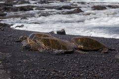 Tartarugas de mar verde (ilha grande Havaí) imagens de stock