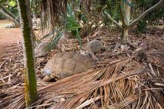 Tartarugas do sono no parque natural de Vanille do La, Maurícias imagens de stock royalty free