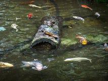 Tartarugas em um log Foto de Stock