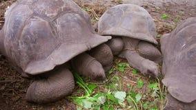 Tartarugas gigantes fora filme