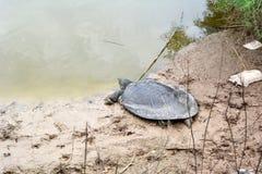 Tartarugas gigantes no banco do rio Alexander fotografia de stock royalty free