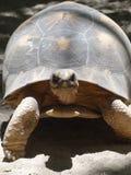 Tartarugas na praia em Madagáscar Imagens de Stock