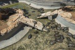 Tartarugas no aquário Fotos de Stock