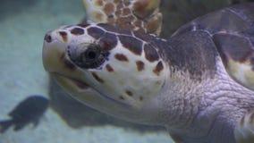 Tartarugas, tartarugas, répteis, animais, animais selvagens filme