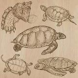 Tartarugas - um bloco tirado mão do vetor Fotos de Stock