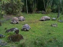 tartarughe Immagini Stock