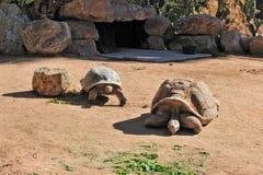 Tartarughe al giardino zoologico Fotografia Stock Libera da Diritti