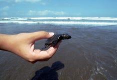 tartarughe del vento Fotografie Stock