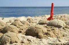 Tartarughe della sabbia Fotografie Stock