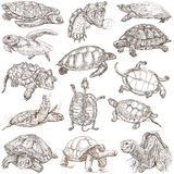 Tartarughe - Freehands, disegni 100% della mano Fotografia Stock Libera da Diritti