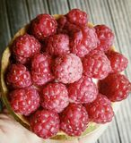 Tarte de framboise Photo stock