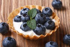 Tartlets with blueberries in yogurt closeup horizontal Stock Images