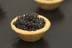 Tartlets com fim preto do caviar acima Fim do alimento gourmet acima, aperitivo delicatessen Alimento do gourmet Textura do cavia fotografia de stock