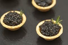 Tartlets com fim preto do caviar acima Fim do alimento gourmet acima, aperitivo delicatessen Alimento do gourmet Textura do cavia imagens de stock royalty free