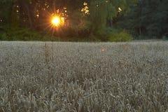 Tarwe die landschap planten Royalty-vrije Stock Fotografie