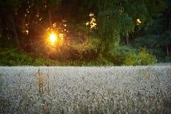 Tarwe die landschap planten Royalty-vrije Stock Afbeeldingen