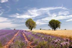 Tarwe en lavendel stock fotografie