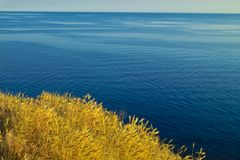 Tarwe en oceaan Royalty-vrije Stock Afbeeldingen
