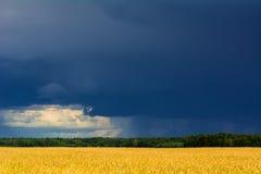 Tarwe geel gebied en de donkere hemel, Grodno, Wit-Rusland Royalty-vrije Stock Foto