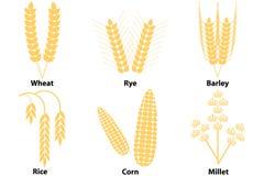 Tarwe, graan, rijst, gerst, gierst Royalty-vrije Stock Fotografie