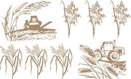 Tarwe, oogst en machines royalty-vrije illustratie
