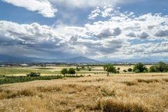 Tarwe op Bewolkt landschap Royalty-vrije Stock Fotografie