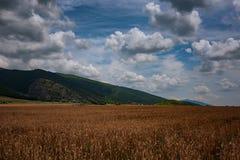 Tarwegebied in de Berg van Stara Planina, Bulgarije Royalty-vrije Stock Foto