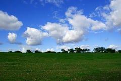 Tarwegebied en blauwe hemel met witte wolken en bomenachtergrond royalty-vrije stock afbeeldingen