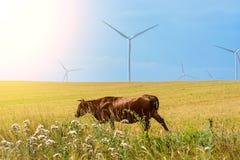 Tarwegebied en ecomacht, windturbines Royalty-vrije Stock Foto