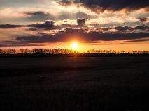 Tarwegebied en zonsondergang Stock Foto's
