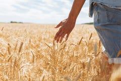 Tarwegebied, landschapsmening, Zonnige dag, vele hectaren land met tarwe stock afbeeldingen