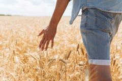 Tarwegebied, landschapsmening, Zonnige dag, vele hectaren land met tarwe stock fotografie