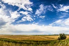 Tarwegebied met blauwe hemel met zon en wolken Stock Foto