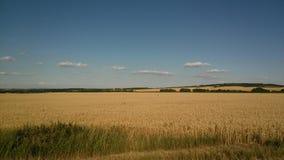 Tarwegebied in Zuid-Moravië stock afbeelding