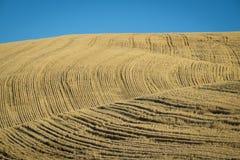 Tarwegebieden klaar voor oogst, Washington State royalty-vrije stock foto