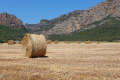 Tarwegebieden na oogst 3 stock foto's