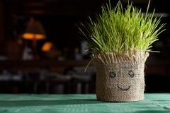 tarwegras het voortkomen uit een pot met smileygezicht dat wordt behandeld Stock Afbeeldingen