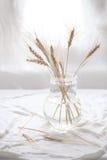 Tarweoren in transparante vaas Stock Afbeelding
