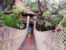 Tarzan& x27; шалаш на дереве s Стоковое фото RF