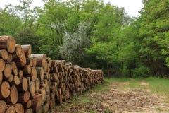 Tas de bois dans la forêt Images stock