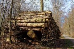 Tas de bois dans les bois Images libres de droits