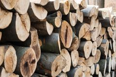 Tas de bois dans une forêt européenne Images libres de droits