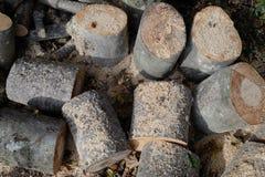 Tas de bois de grands rondins en bois avec la sciure Photographie stock libre de droits