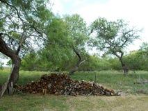 Tas de bois de mesquite par la barrière Photographie stock