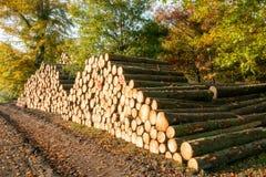 Tas de bois de rondin dans une forêt Image stock
