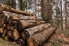 Tas de bois de grands arbres dans la forêt Photos libres de droits
