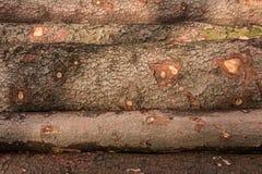 Tas de bois de grands arbres dans la forêt Photographie stock