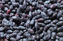 Tas de chèvrefeuille (lat Lonicera edulis) Photos stock