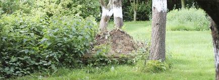 Tas de compost dans un jardin naturel Photos stock