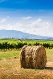 Tas de foin et cyprès en Toscane, Italie Images libres de droits